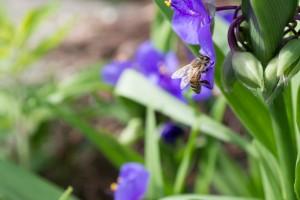 Biene mit D800E und 18-55 mm DX Objektiv fotografiert
